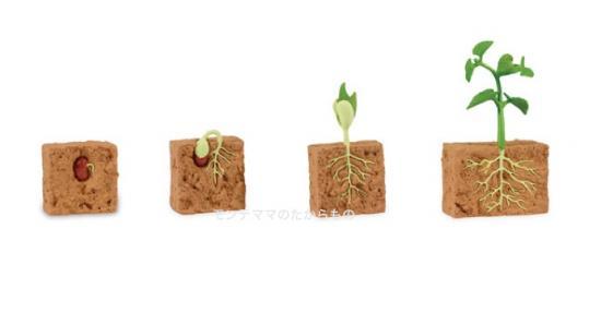 モンテッソーリ教具 - 成長モデル